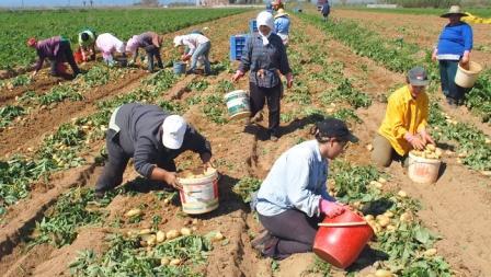 Δώδεκα χιλιάδες αγρότες επιστρέφουν τις αποζημιώσεις